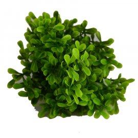 Gałązka bukiet zielony bukszpan 31cm Wielkanoc