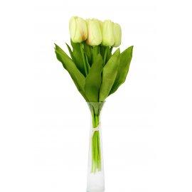 Bukiet Jasno zielonych Tulipanów 9 szt