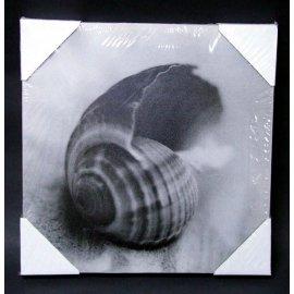 Obraz muszla 28x28