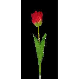 Pojedynczy kwiat tulipana 60cm czerwony